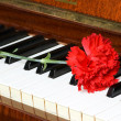 Romantic concept - carnation on piano — ストック写真