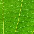 Very extreme close up of green leave — Stock Photo #2603700