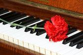 Romantic concept - carnation on piano — Stock Photo