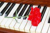 Concetto romantico - garofano al pianoforte — Foto Stock