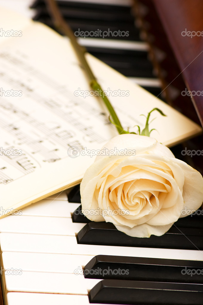 Romantic concept - white rose on piano keys  Stock Photo #2602472