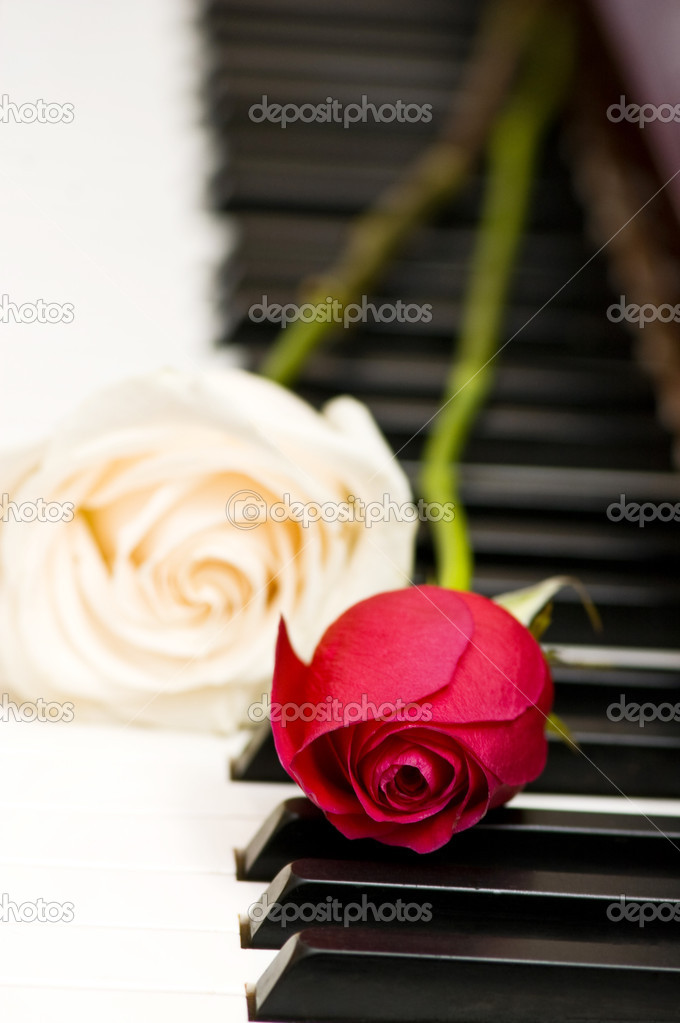 Romantic concept - red rose on piano keys — Stock Photo #2603518
