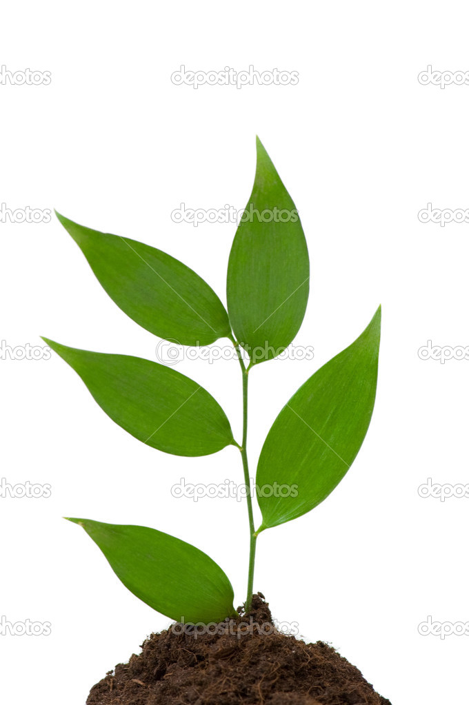 Seedlings growing isolated on the white background — Stock Photo #2603657