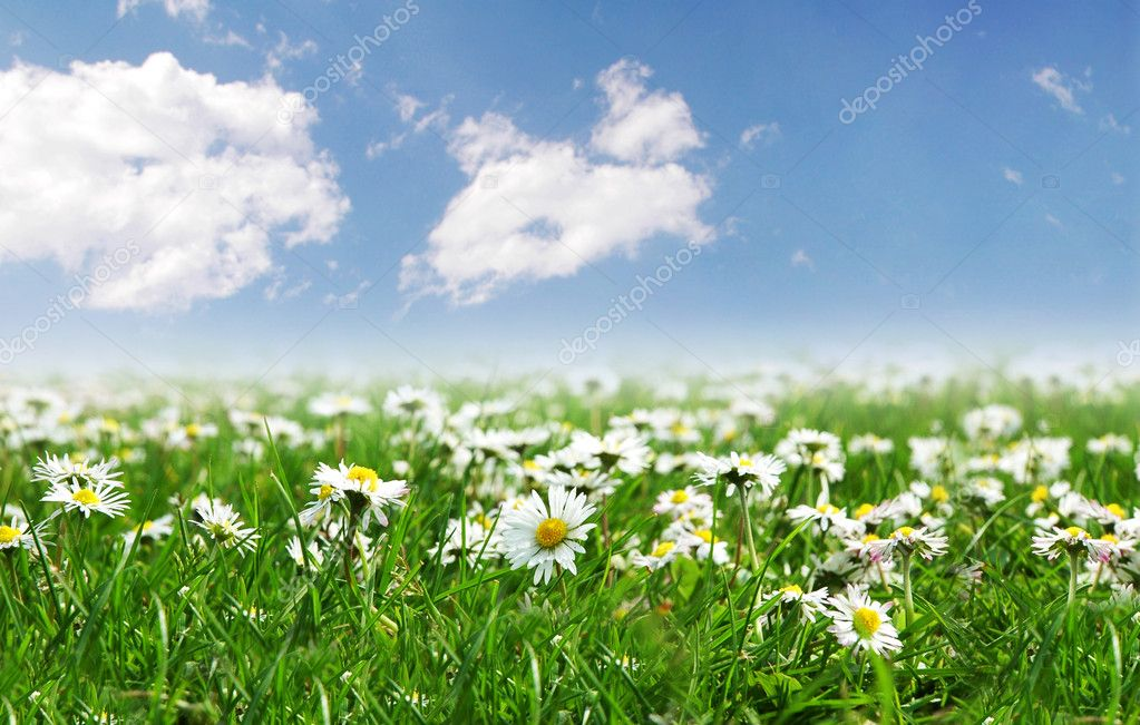 Field of daisies with bright sun on the sky — Foto de Stock   #2632791