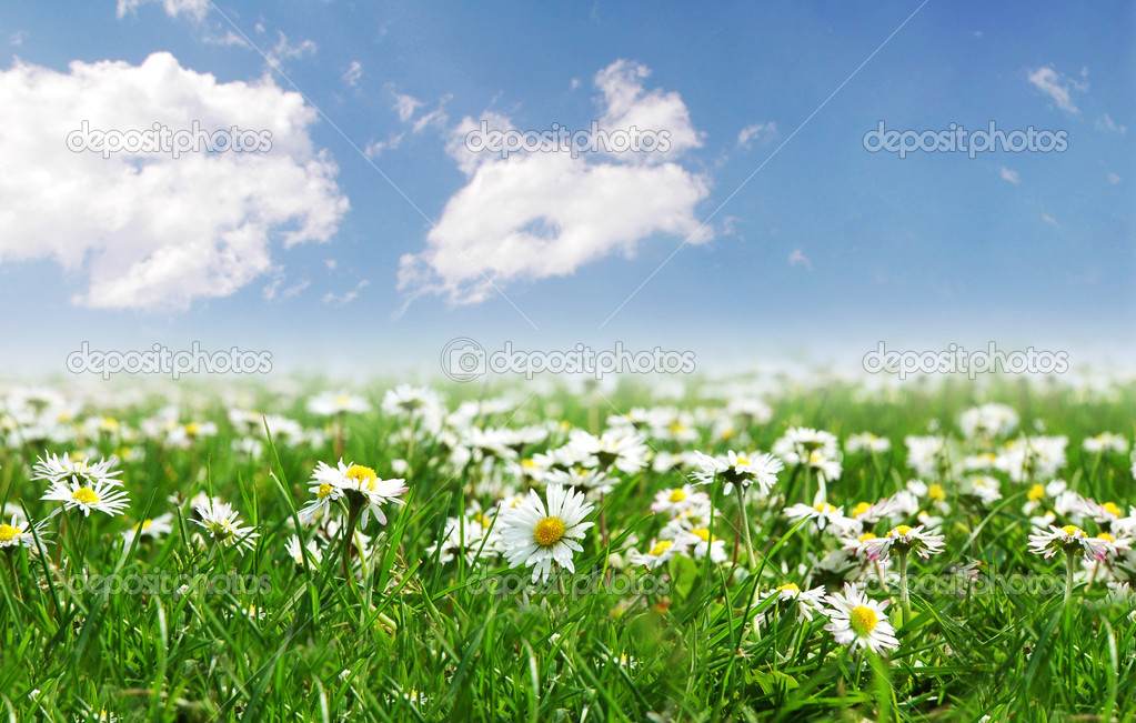 Field of daisies with bright sun on the sky — Stockfoto #2632791