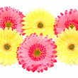 Various colorful flowers isolated — Stock Photo