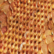 Rows of golden coins — Stock Photo