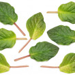 Selection of various green leaves — Stockfoto