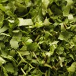 Shredded herbs — Stock Photo