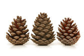 Three pine cones isolated on white — Photo