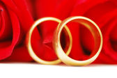 Two gold wedding rings and roses — Stockfoto