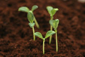 New life concept - seedlings growing — Stock Photo