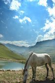Grey horse near the small lake — Stock Photo