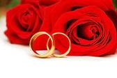 Twee trouwringen en rode rozen — Stockfoto
