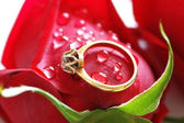 Wedding ring with brilliant on the rose — Stock Photo
