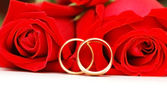 Two wedding rings and red roses — Stock Photo