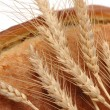 Wheat ears and bread loaf isolated — Stock Photo
