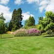 Trees and lawn on a bright summer day - Stock Photo