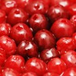 Stock Photo: Red bright berries