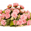 Big bouquet of roses isolated — Stock Photo