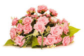 Big bouquet of roses isolated — Stok fotoğraf
