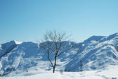 Tree and mountains on the day — Stock Photo