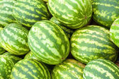Water-melon — Stock Photo