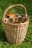 The big wattled basket with mushrooms — Stock Photo