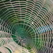 Dewy spider web - Stock Photo
