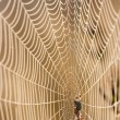 Dewy spider web — Stock Photo