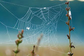 Dewy spinnenweb — Stockfoto