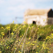 Stock Photo: Abandoned home in flower field