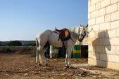 Einsam pferd — Stockfoto