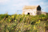 Abandoned home in flower field — Stock Photo