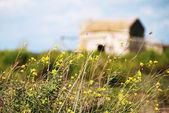 Casa abandonada en el campo de flor — Foto de Stock