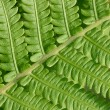 Fern — Stock Photo #1209022