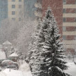 Snowfall — Stock Photo #1209601
