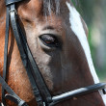 Horse — Stock Photo #1209616