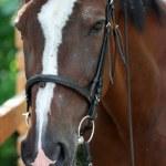 Horse — Stock Photo #1209658