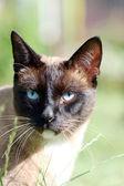 Katten — Stockfoto