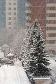 Strong snowfall in the winter in city — Stock Photo