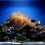 acquarium — Stockfoto