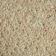 Carpet — Photo