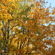 Foliage of autumn trees — Stock Photo