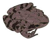 Spotty frog — Stock Vector