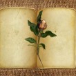 Open old book with rose on the isolated — Stock Photo