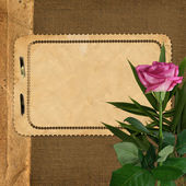 Sheet for design on background with rose — Stock Photo