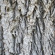 Bark — Stock Photo #1216459