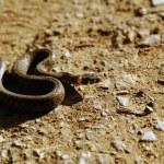 Snake — Stock Photo #1204432