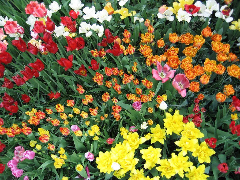 Цветы цветущие с весны до осени с
